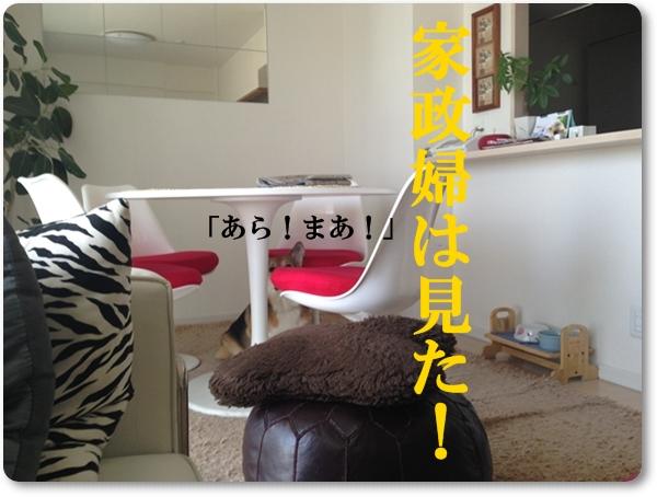 IMG_7898.jpg