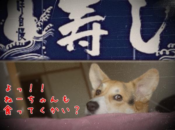 susi_2.jpg