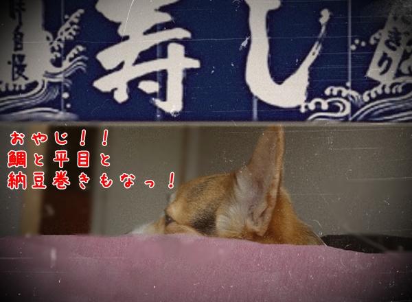 susi_3.jpg