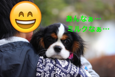 fc2blog_20141206202200666.jpg