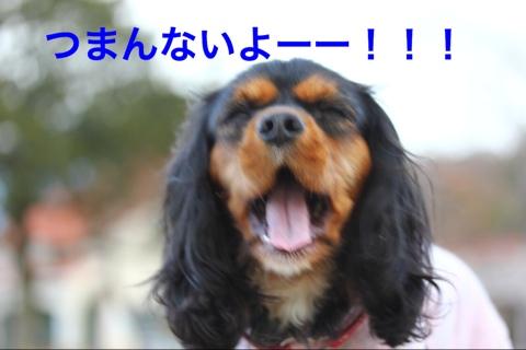fc2blog_20141206203533d19.jpg