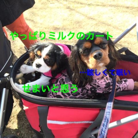 fc2blog_2014120812283629b.jpg