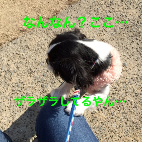fc2blog_20141210062913fc6.jpg