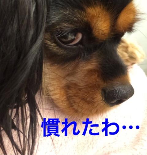 fc2blog_2014121621530703a.jpg