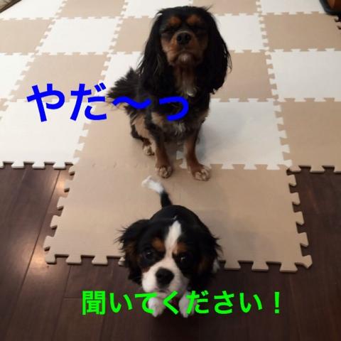 fc2blog_201412192159282ee.jpg