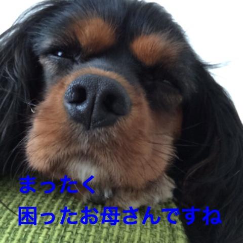 fc2blog_2014122022213595b.jpg