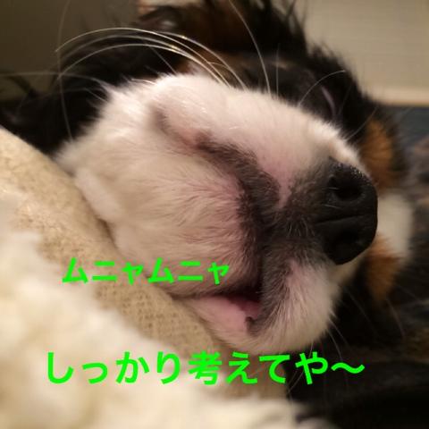 fc2blog_20141220223825ff5.jpg