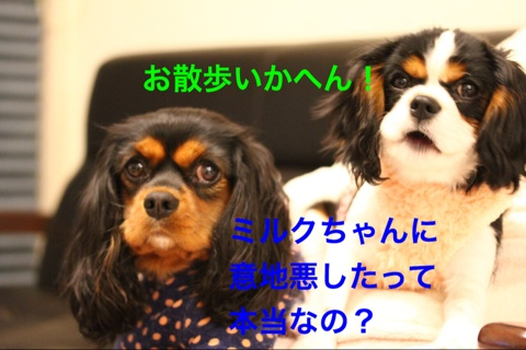 fc2blog_20141221215851ad3.jpg