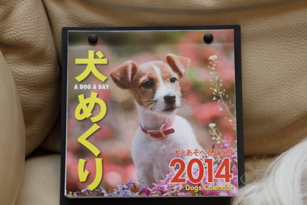 IMG_1790犬めくり2014犬めくり2014