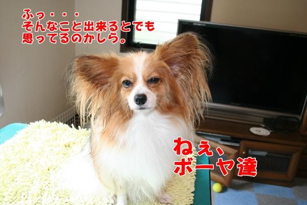 2008_8_30 シャンプー20080830_1794