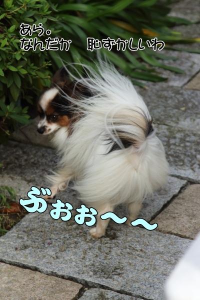 IMG_2108昭和記念公園昭和記念公園