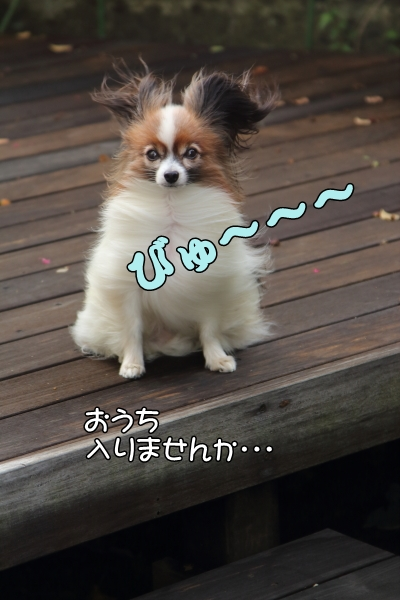 IMG_2109昭和記念公園昭和記念公園