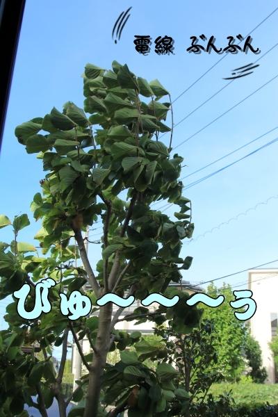 IMG_2119昭和記念公園昭和記念公園