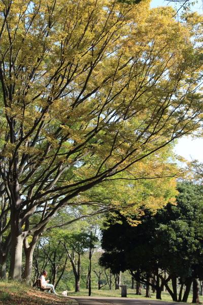 IMG_2235根岸森林公園根岸森林公園