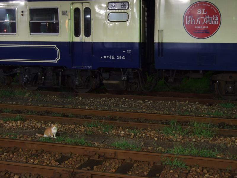 2013/08/30 新津駅 ネコ