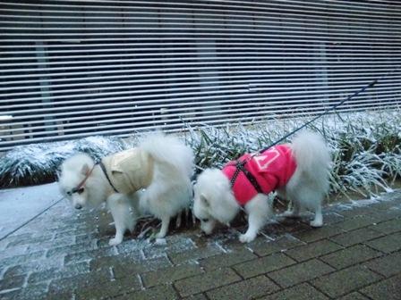 雪、朝、ふたり