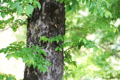 20130527森林