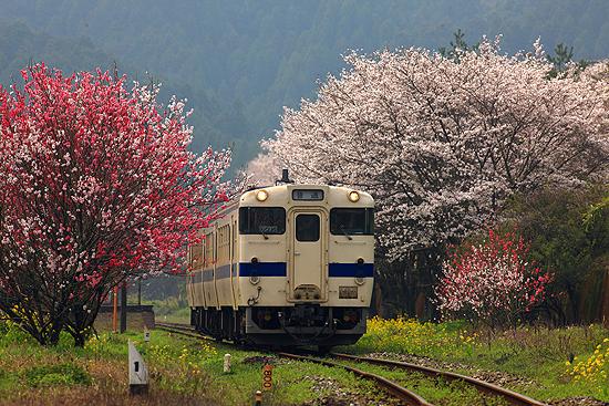 宝珠山の春