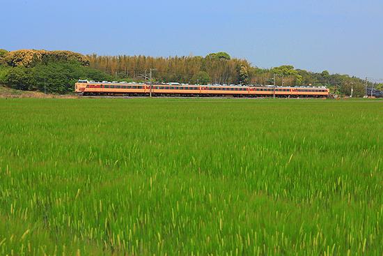 敷田の麦畑