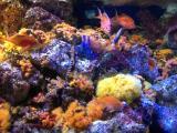 色鮮やかな水槽