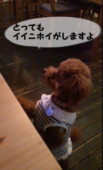 7_convert_20130923194523.jpg
