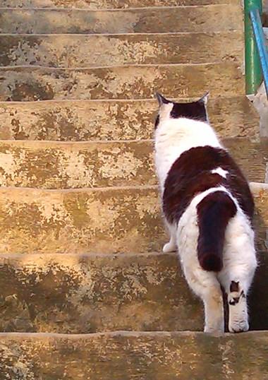 hokekyocat blwh 20130313_stairs bck