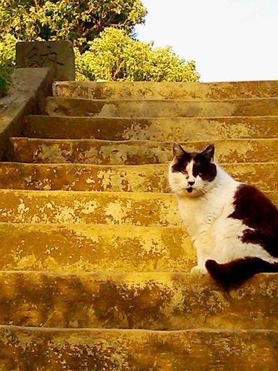 hokekyocat blwh20130313_stairs