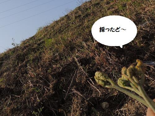 DSCN1176.jpg