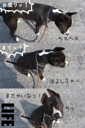 散歩にGO!