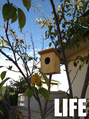 Cat&Bird Nestと襲名披露