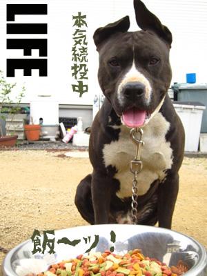 パブロフの犬