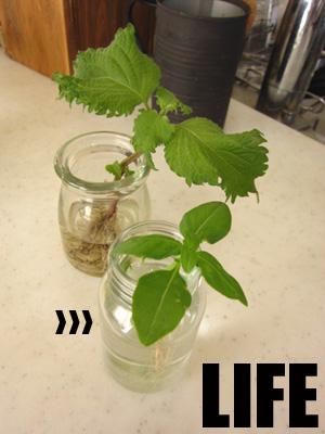 植物チャレンジ
