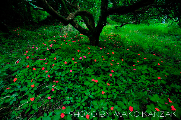 kanzaki_08_08.jpg