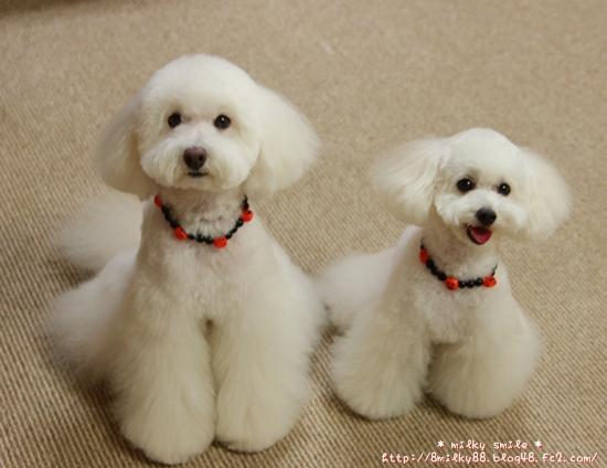 IMG_7620_20121008135240.jpeg