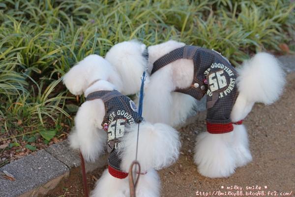 IMG_7688_20121008135238.jpeg