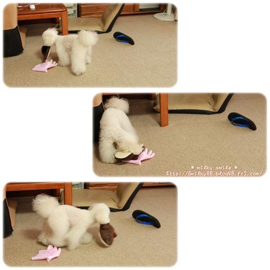 cats_20120606074925.jpeg