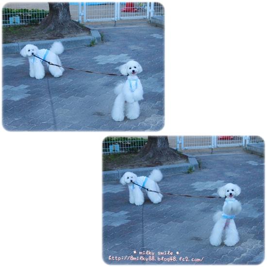 cats_20120718075539.jpeg