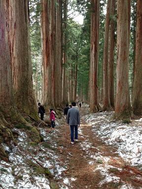 これが杉並木