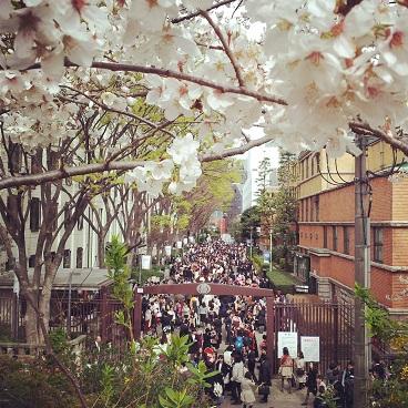 大学の桜並木にて