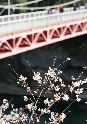 桜淵橋&桜