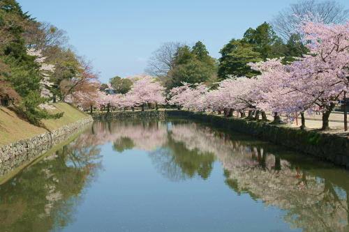 彦根城桜4 (2)