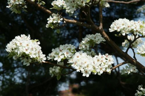 鶴岡公園7