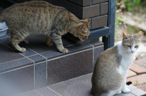 ぶち子&キジ子2