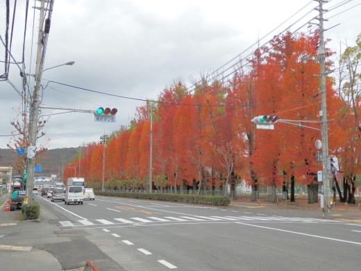 okayamakitawardokayamaprefecturalmultipurposegroundswestsiglnal1411-2.jpg