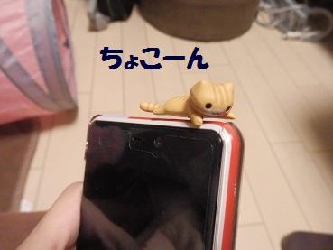 P3144589.jpg