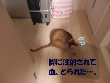 P3164630.jpg