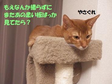 P3194670.jpg