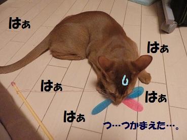 P3214703.jpg