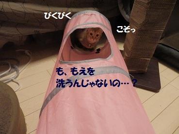 P3294825.jpg