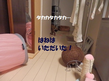 P4125043.jpg